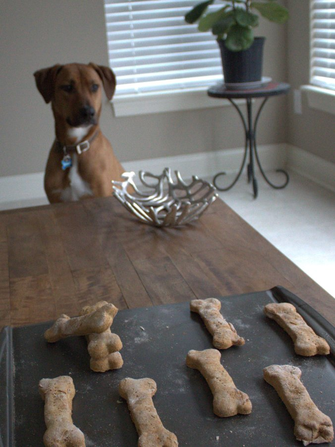 Homemade Sweet Potato Dog Treats | www.thebahamallama.com